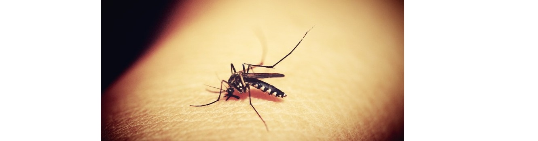 Un estudio avanza en el diagnóstico rápido de niños con malaria asintomática